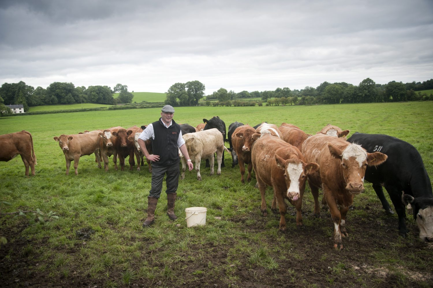A visit to one of Ireland's beef farms