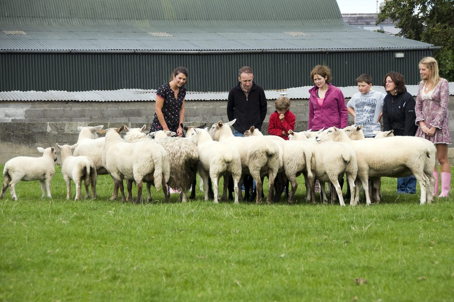 an Irish sheep farm
